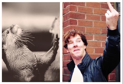 Benedict lontra 3