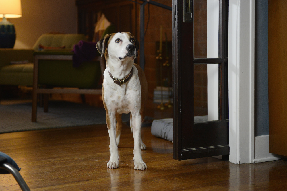 Downward Dog (1)